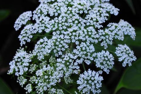DSC_7621 白い花 480.jpg
