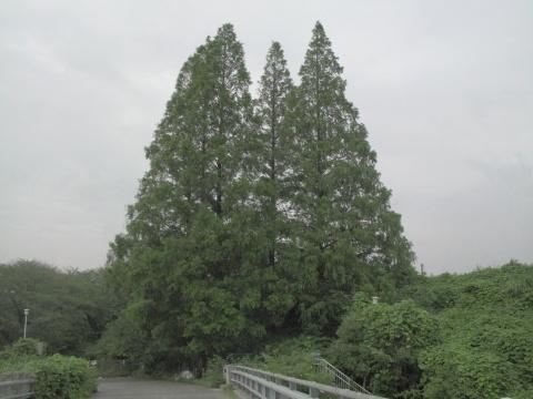 IMG_6032メタ480.jpg